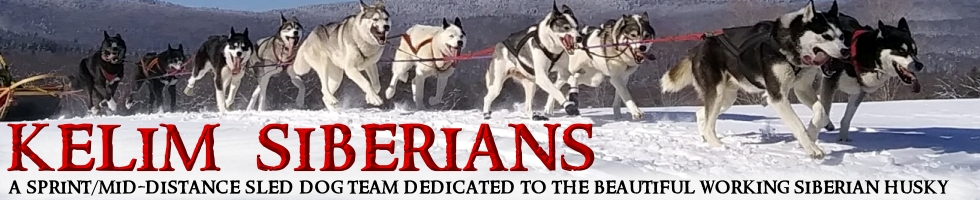 Racing Siberian Huskies Located In New Hampshire